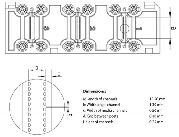 AIM Chip Dimensions