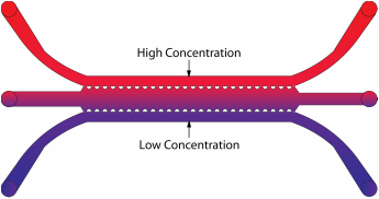 Illustration of a chemical gradient