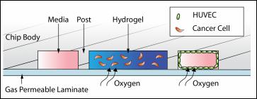 Gas permeable laminate