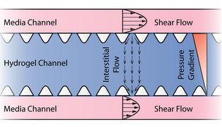 Interstitial and shear flows