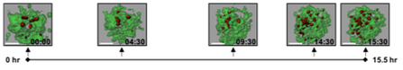 T Cells Organiods