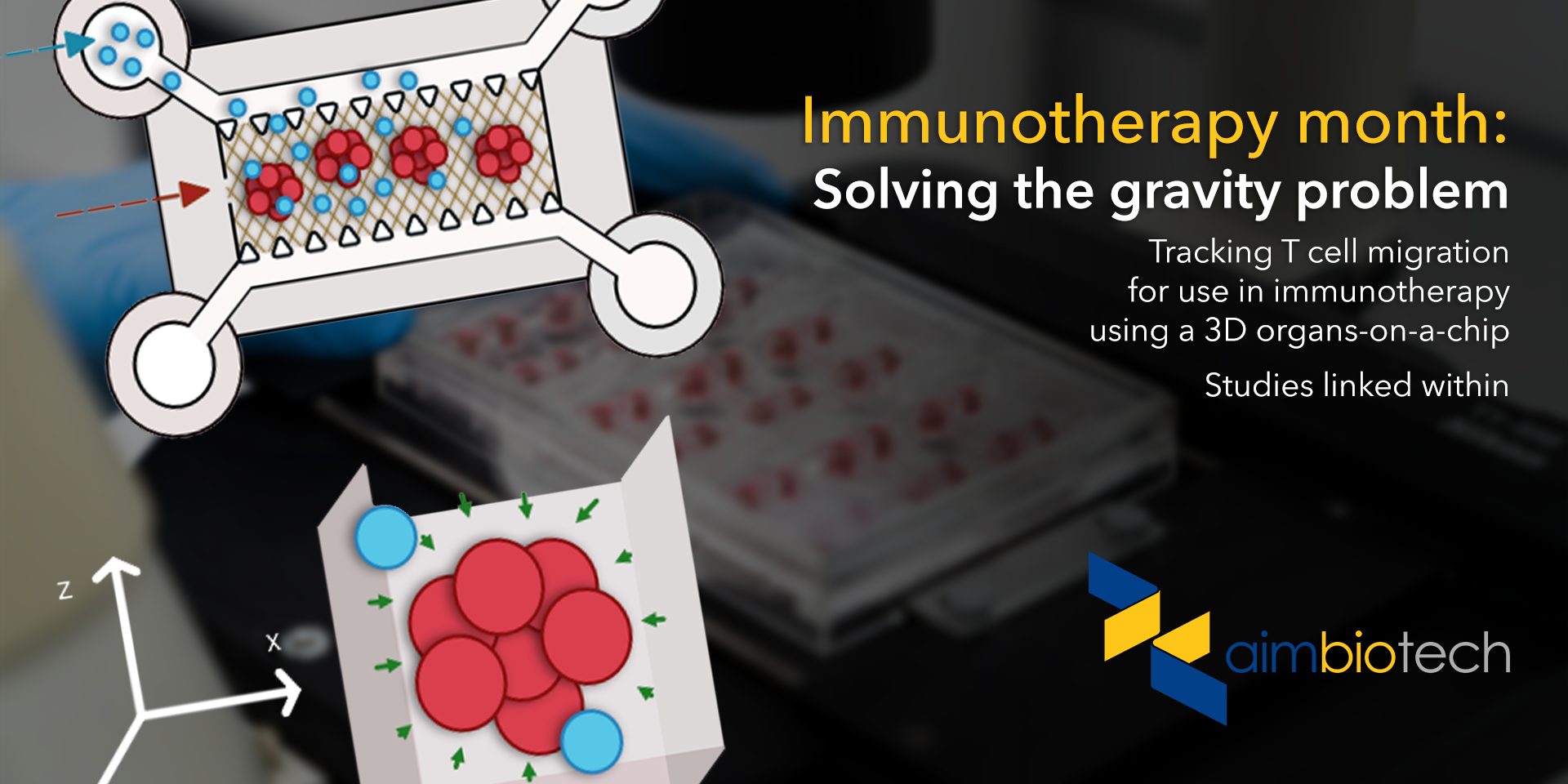Immunotherapy month: Tracking T cell migration for use in immunotherapy using a 3D organs-on-a-chip