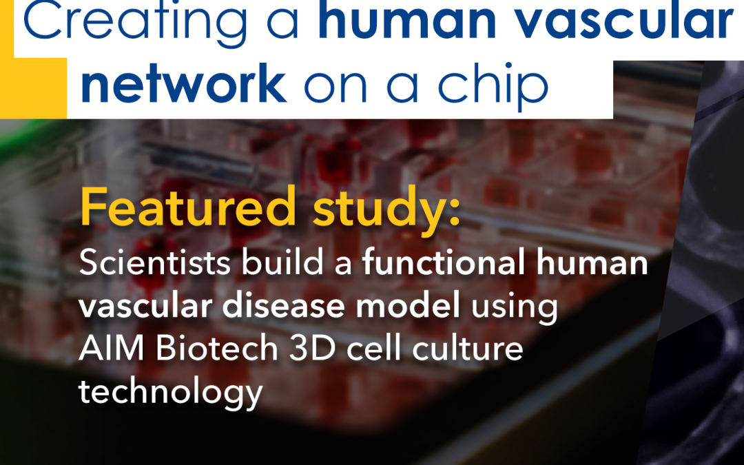 Building a functional human vascular disease model using AIM Biotech 3D cell culture technology